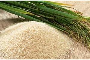 Ориз: Впечатляваща устойчивост на арпата въпреки негативния доклад на USDA