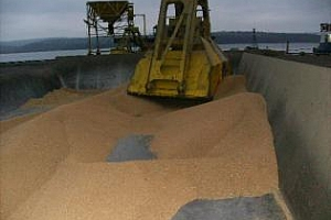 Турция може да намали вноса на пшеница заради увеличено производство
