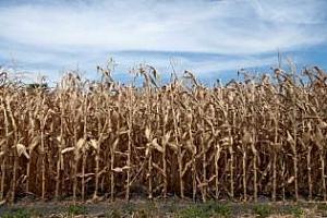 Прогноза за суша в САЩ и през новия сезон