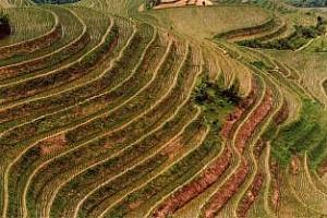 Ориз: Петък беше поредният ден на понижение в цената на арпата