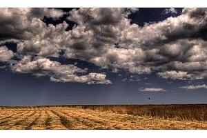 Времето подведе американските фермери