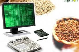 Седмичен обзор: Цените на пшеницата и царевицата падат под влияние на хубавото време и очаквания напредък на пролетната сеитба