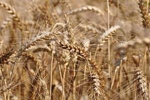 Израел проведе търг за закупуване на голяма партида зърно