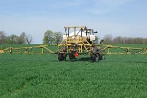 400-450 кг от декар пшеница очакват земеделците Варненско тази година