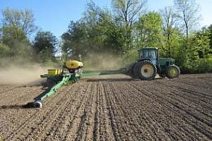 Агро коментар: Цената на царевицата може да се понижи значително