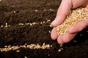Сеитбата в Казахстан буксува заради недостига на семена