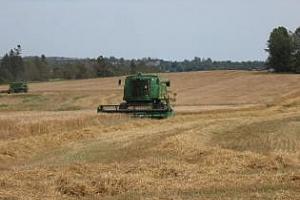 Руският зърнен съюз очаква до 100 млн. тона зърнена реколта тази година