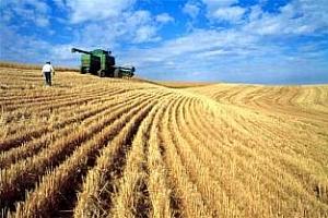 Турция: Зърнената реколта ще се повиши с 9,1%