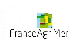 Развитието на зърнените култури във Франция се забавя