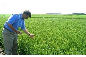 Сутрешно кафе: ГМО-скандал предизвика понижаване на борсовите цени