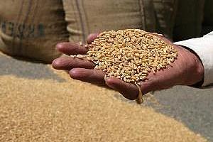 Иран закупи 200 хил. тона пшеница