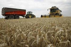 Ирак планира да удвои производството на пшеница и да се превърне в износител
