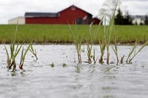 ЕС: Загубата на зимна пшеница от студовете може да достигне 6 млн. тона
