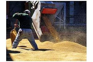 Износ на пшеница, ечемик и рапица от Черноморските ни пристанища.