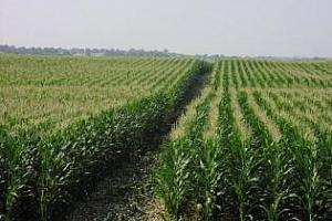 САЩ: Състоянието на посевите пшеница е по-добро от преди една година