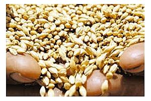 Търгове за пшеница и ечемик