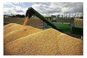 Алжир купи 20 кмт царевица