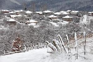 Снегът запази житната реколта