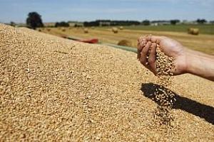 Резултат от търга за пшеница на Йордания