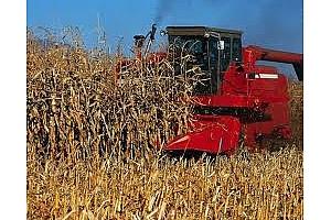 Резултат от търга за царевица на Либия