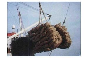 Турция: рекорден внос на маслодайни за октомври-февруари 2011/12 МГ