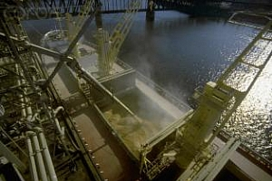 Египет ще увеличи вноса на царевица за 2012/13 МГ до 5,2 млн. т