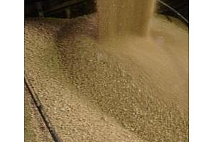 Износът на руска пшеница през март порасна с 58%