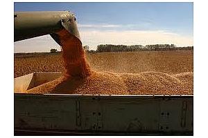 Резултат от търга за фуражна царевица на Израел