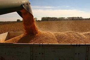 Великобритания: Износът на пшеница през февруари е спаднал