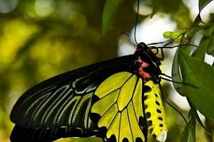 """""""Ефекта на пеперудата"""" или защо ни интересуват падналите самолети."""