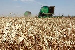 Австралия: добивът на пшеница ще бъде 26,1 млн. тона
