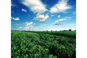 Аржентина: прогнозите за добива на соя и царевица за 2011/12 МГ се понижи