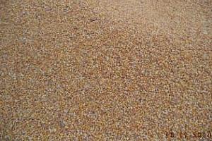 Фуражна царевица е купила Южна Корея