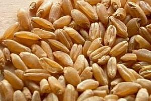 Резултати от търга за хлебна пшеница на Йордания