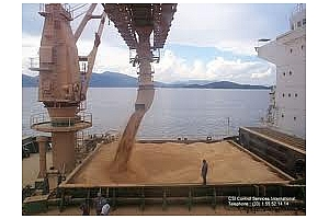 Бюлетин за експорта на зърнени и маслодайни култури от пристанищата във Варна 13-16 февруари