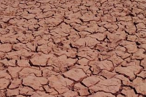 Заплаха от воден режим, спасяват спешно зърното