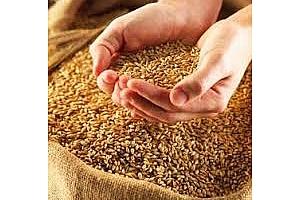 Хлебна пшеница и фуражен ечемик купени от Тунис