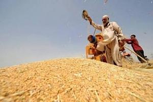 През 2012/13 МГ Ирак внася 3,95 млн тона пшеница