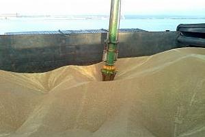 Експорт на зърно и маслодайни от пристанище Варна 1-7 април