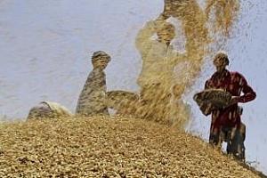 Индия пуска за износ 10 млн. тона пшеница от държавните си запаси