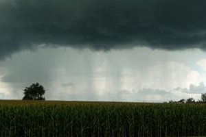 САЩ: Фермерите продължават с бързата сеитба, въпреки дъждовете