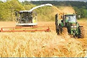 Цените на зърната в Чикаго поскъпват рязко, в Европа следват