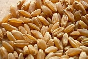Алжир купува голямо количество хлебна пшеница