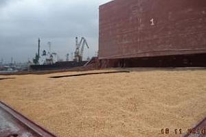 Експорт на зърно и маслодайни от пристанище Варна 29 септември - 1 октомври