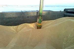 Експорт на зърно и маслодайни от пристанище Варна 25-29 октомври
