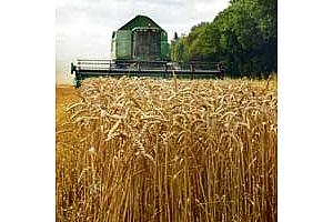 ИКАР: Добивът на зърно в Русия ще е по-малък заради сушата