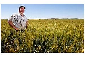 Пшеницата в Чикаго изпуска въздух и отстъпва на $5 за бушел