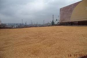 Експорт на зърно и маслодайни от пристанище Варна 6-13 ноември