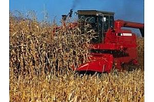 Южна Корея е провела търг за покупката на фуражна царевица