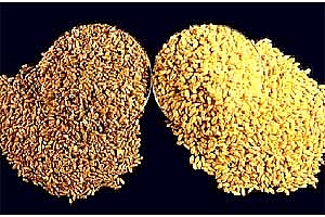 Япония провежда търг за покупка на хлебна пшеница